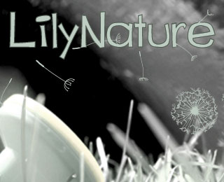 Lily Nature